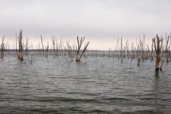 Het verdronken bos in Cedar Bluff Reservoir stock fotografie