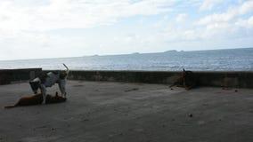 Het verdwaalde Honden spelen en ontspant bij openlucht naast strand en overzees stock videobeelden