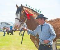 Het verfraaide paard in Nairn toont. stock fotografie