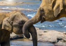 Het verhaal van de olifantenliefde in rivier royalty-vrije stock foto