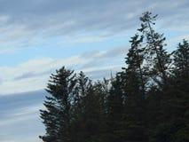 Het verkennen voor Eagles in Alaska stock afbeelding