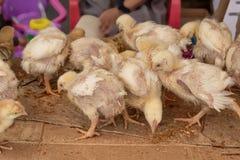 Het verkopen kleine kuikens op de markt Quito Ecuador royalty-vrije stock foto's