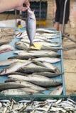 Het verkopen verse vissen op Mediterrane vissenmarkt stock foto
