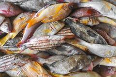 Het verkopen verse zeevruchtenvissen op de toeristische attractie lokale markt in Jimbaran, Bali royalty-vrije stock fotografie