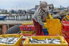 Het verkopen vissen Royalty-vrije Stock Foto's