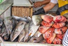 Het verkopen vissen in de markt Close-up ecuador royalty-vrije stock afbeelding