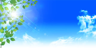 Het verlaat verse groene boomachtergrond Royalty-vrije Stock Afbeelding