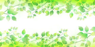 Het verlaat verse groene boomachtergrond Stock Afbeeldingen