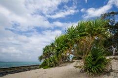 Het verlaten strand van Geheimzinnigheid Eiland in Vanuatu Stock Afbeeldingen