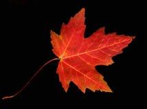 Het verlof van de herfst royalty-vrije stock foto