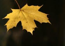 Het verlof van de herfst Stock Foto's