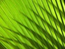 Het verlof van de palm Royalty-vrije Stock Fotografie