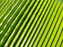 Het verlof van de palm Stock Afbeeldingen