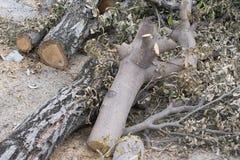 Het verminderen van Bomen Royalty-vrije Stock Afbeeldingen
