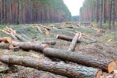 Het verminderen van Bomen royalty-vrije stock foto
