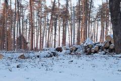 Het verminderen van Bomen Logboeken met sneeuw worden behandeld die royalty-vrije stock foto's