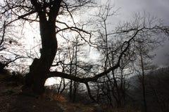 Het verontrusten en sprookje donkere boomboomstammen somber en vijandig wild milieu, ongastvrije aard stock afbeelding