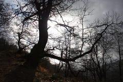 Het verontrusten en sprookje donkere boomboomstammen somber en vijandig wild milieu, ongastvrije aard royalty-vrije stock afbeeldingen