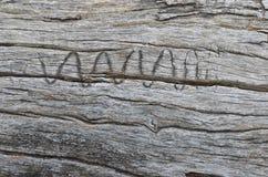 Het verouderen houten logboek met wriggly dierlijk teken Stock Afbeelding