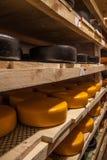 Het verouderen van kaas bij kaasfabriek Stock Afbeelding