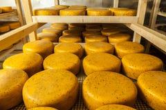 Het verouderen van kaas bij kaasfabriek Royalty-vrije Stock Afbeeldingen
