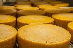 Het verouderen van kaas bij kaasfabriek Stock Foto's