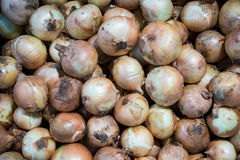 Het verouderen van uien in verse markt royalty-vrije stock foto's