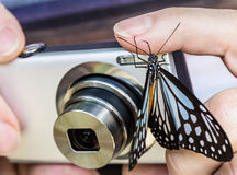 Vlinder op Camera Stock Foto's