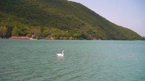Het verre plan Een mooie witte zwaan zwemt in een mooi turkoois meer stock video