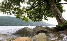 Het verre varen met het hangen van boom over meer Royalty-vrije Stock Afbeelding