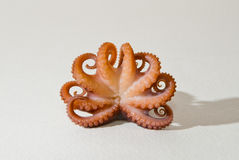 Het vers gekookte close-up van de babyoctopus Royalty-vrije Stock Foto