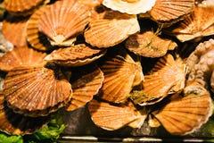 Het verse assortiment van kammosselenzeevruchten bij de vissenmarkt royalty-vrije stock foto's