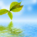 Het verse blad, blauwe hemel en glanst waterspiegel royalty-vrije stock foto
