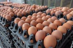 Het verse ei sorteren en sorteermachine, rangei in gewicht en grootte stock foto