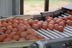Het verse ei sorteren en sorteermachine, rangei in gewicht en grootte stock afbeelding