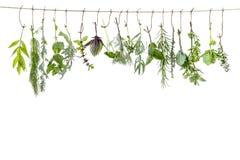 Het verse flovouring en geneeskrachtige installaties en kruiden die op een koord, voor een witte backgroung hangen stock afbeelding