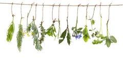 Het verse flovouring en geneeskrachtige installaties en kruiden die op een koord, voor een witte backgroung hangen stock fotografie