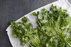 Het verse geplukte koriander drogen op witte keukenhanddoek en de landelijke donkere lijst royalty-vrije stock afbeelding