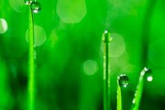 Het verse gras met dauw daalt dicht omhoog De abstracte Achtergrond van de Aard Stock Afbeeldingen