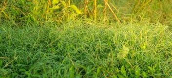 Het verse gras met dauw daalt dicht omhoog onder ochtendzonneschijn Royalty-vrije Stock Afbeeldingen
