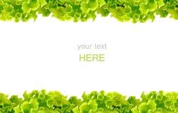 Het verse Groene frame van de Salade royalty-vrije stock foto