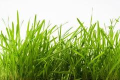 Het verse groene gras Royalty-vrije Stock Afbeeldingen