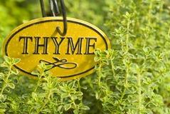 Het verse Kruid van de Thyme Stock Afbeeldingen