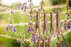 Het verse lavendel drogen op een lijn met grepen royalty-vrije stock afbeeldingen