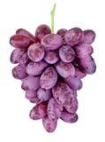 Het verse natte rode druiven hangen geïsoleerd op witte achtergrond Stock Foto's