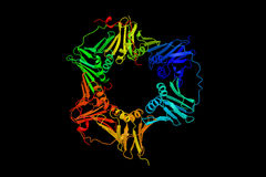 Het verspreiden zich cel kernantigeen, een DNA-klem en een steiger t Stock Foto