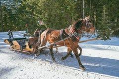 Het vervoer van de paardar Royalty-vrije Stock Afbeeldingen