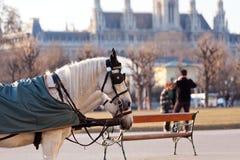 Het vervoer van Fiaker in Wenen, Oostenrijk Stock Fotografie