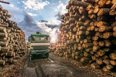 Het vervoer van pijnboom opent een zaagmolen het programma stock foto