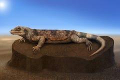 Het verwarmen van de Hagedis van de woestijn op een rots - digitaal art. Stock Foto's
